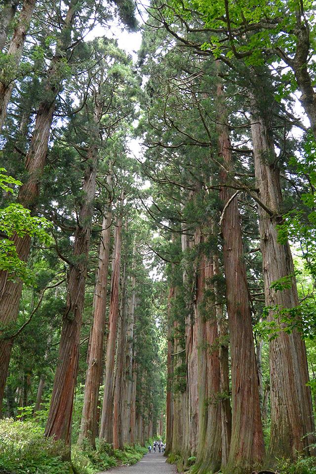 奥社・随神門から先は有名な杉並木
