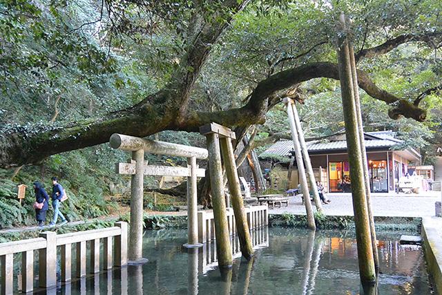 鹿島神宮・御手洗池